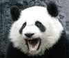 pandation Avatar