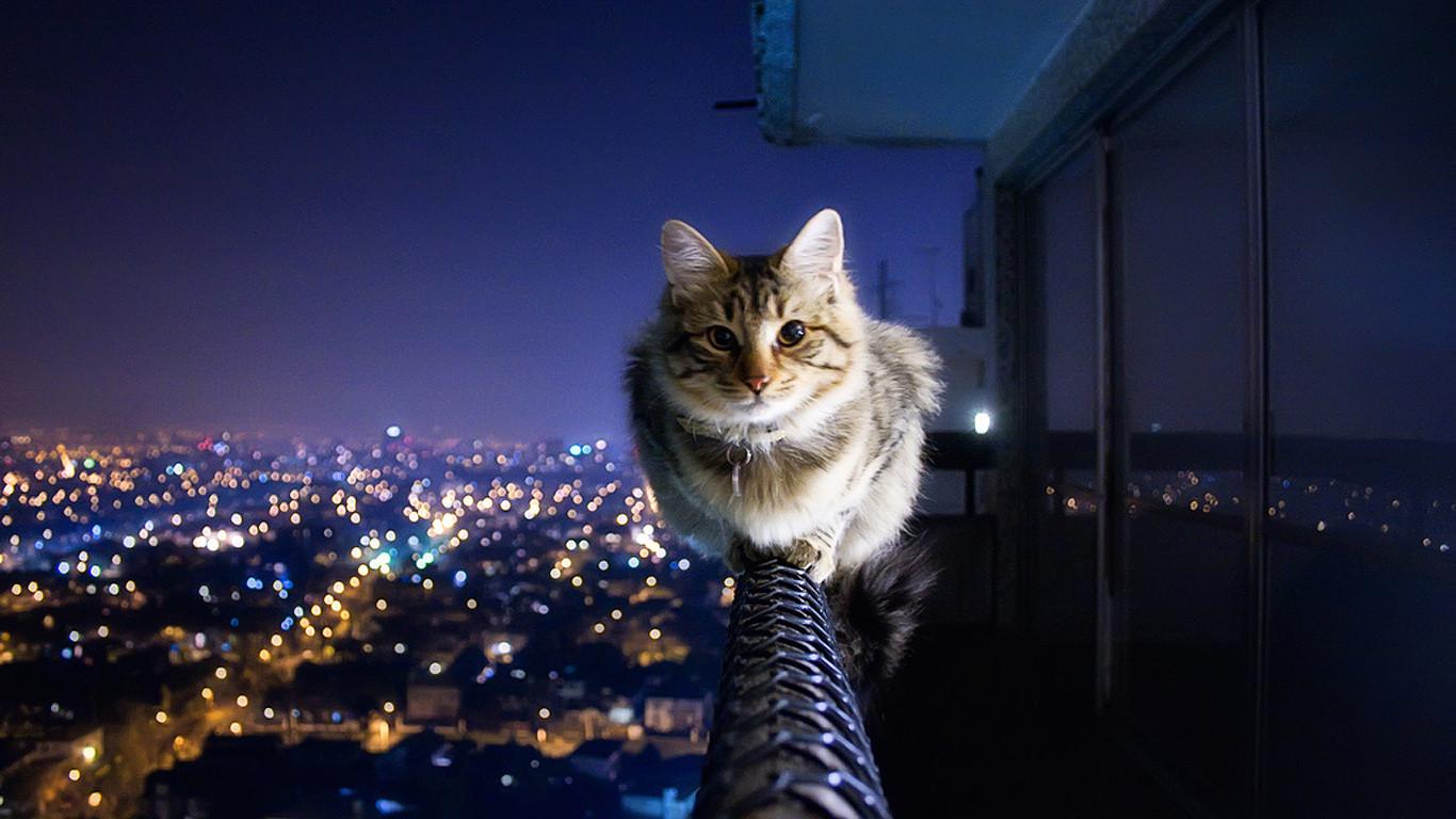 vertigo you say this cat must be bricks added by vertigo you say this cat must be